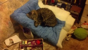 This is Kisa (Key-sah). She really liked cuddling with the quilt.
